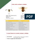 Diferencias entre avispas y abejas