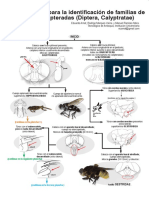 ClaveIlustradadeCalyptratae_Amatetal2018.pdf