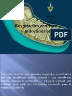 11.- RESPIRACION AEROBICA.ppt