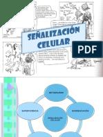 Señalización celular.ppt