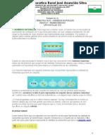 GUIA UNIDAD1 TEMA 1 (P1) MAT6.docx