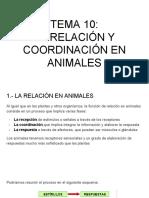 TEMA 10_ LA RELACIÓN Y COORDINACIÓN EN ANIMALES.pdf
