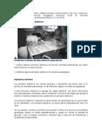 Tema 2  Los principios didácticos