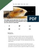 16. Coxtwightlight zone fishesresources2017 ICTIOLOPLANTO