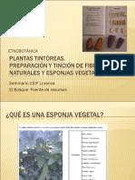 preparacinytincindeesponjasvegetales-130207044325-phpapp02