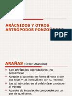 ARÁCNIDOS Y OTROS ARTRÓPODOS PONZOÑOSOS