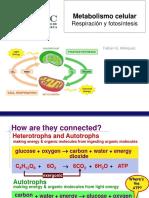 Clase_7 y 8_Fotosíntesis y respiración
