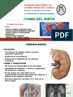 Exposición Anatomia del riñon