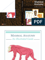 Mammal Anatomy, An Illustrated Guide