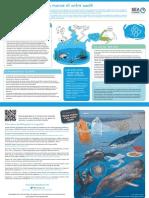 03-fr-la-pollution-marine-et-notre-santé