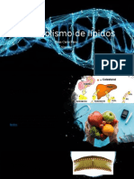 Metabolismo de lípidos.pptx