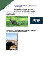 PERIODICO DE MAJO.docx