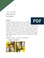 Pragmatica 3