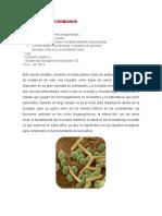 ECOSISTEMAS MICROBIANOS
