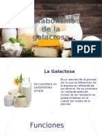 Metabolismo de Galactosa