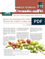 avt0315 Escala de maduración para los frutos de cafeto
