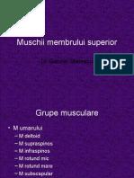 Muschii Membrului Superior