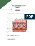 CUESTIONARIO  DE PIEL actividad 2anatomia y fisiologia.pdf
