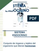 endocrino3