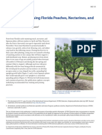 Training and Pruning Florida Peaches, Nectarines, and Plums