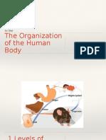 Copia de 1st Unit - The organization of the Human Body.pptx