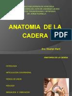 anatomia de la cadera angie