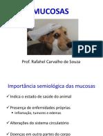 1377736_MUCOSAS E LINFONODOS.pdf