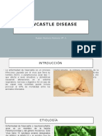 Newcastle Disease 4°A.pptx