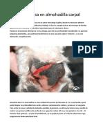 Herida incisa en almohadilla carpal.docx