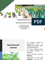 Presentación propagación Sexual