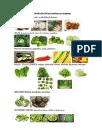 Actividad 1 clasificacion de las hortalizas