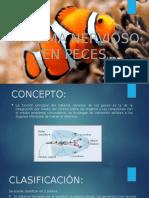 SISTEMA-NERVIOSO-EN-PECES-PPT