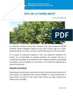 009999_Perfil de La Yerba Mate