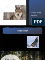 Wolf Project