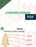 03 - Material Complementar - Sistema Esquelético e Muscular.pdf