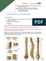 E17- RADIOLOGIA DE LA COLUMNA VERTEBRAL REVISADA.docx