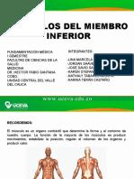 MUSCULOS DEL MIEMBRO INFERIOR.pdf