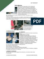 1º SECCIÓN DE CORDÓN UMBILICAL