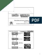 Lesão Celular Reversível (1)