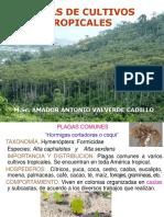 11.Cafécacao-palma-yuca-platano-y-palto46-2015.pdf