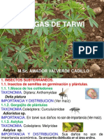 7.-Plagas-de-granos-andinos-22-2015