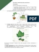 ESTRUCTURA Y FISIOLOGÍA DE LAS PLANTAS