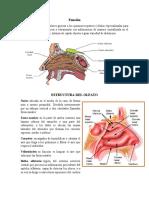 Sentido del olfato, funcion y anatomia