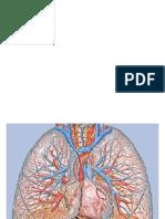 prezentacja-fizjologia-oddychania