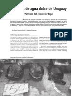 Comercio de tortugas en Uruguay