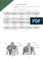 Appendicular Body - Muscles (Upper Limb).pdf