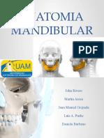 ANATOMIA  MANDIBULAR.pptx