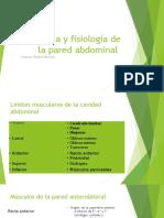 Anatomia y fisiología de la pared abdominal