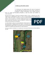 Zona cultivos de Maracuyá