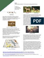 Origen_y_domesticación_del_perro